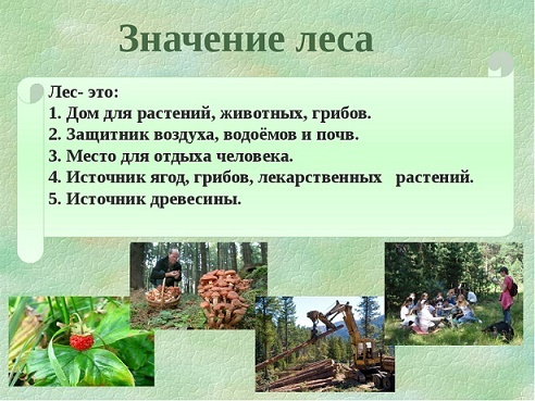 Доклад по окружающему миру про лес