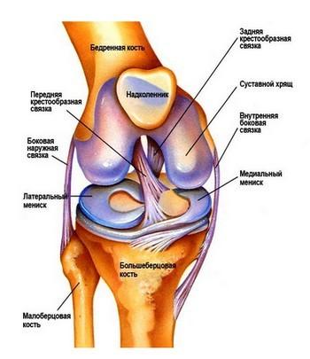 Что сделать чтобы суставы стали подвижными от чего может болеть колено и чем лечить