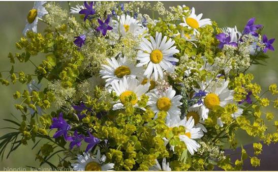 Полевые цветы красивые букеты фото