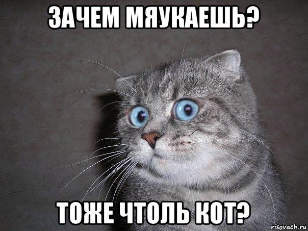 кот мем зачем 3