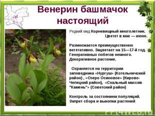 Венерин башмачок - красивоцветущее растение из семейства орхидных aa630188a482a