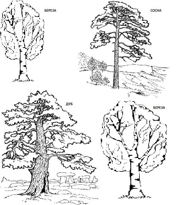 смешанный лист - сосна береза дуб