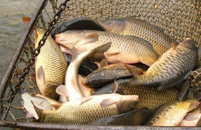 ловля рыбы на улице