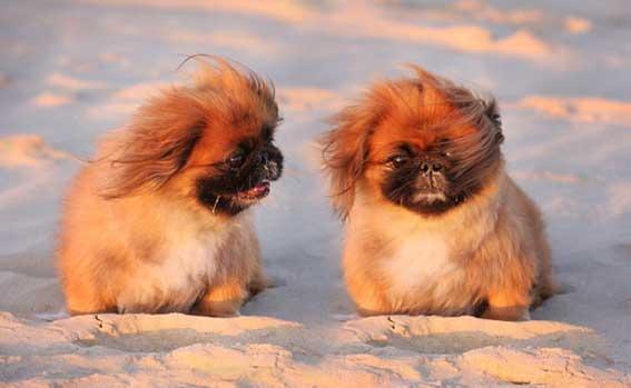 при прогулке знакомство собака с собакой