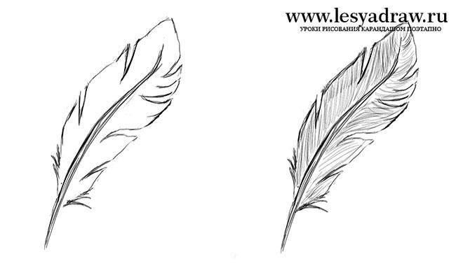 Рисуем перо карандашом поэтапно