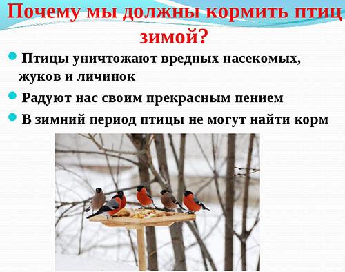 почему необходимо помогать птицам зимой как это правильно делать напиши