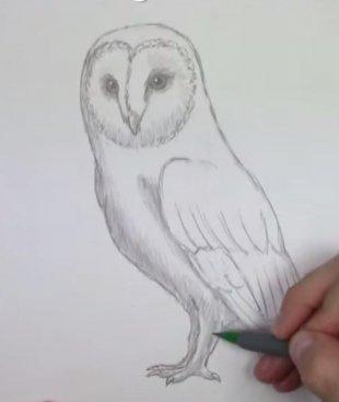 Как нарисовать сову карандашом поэтапно.
