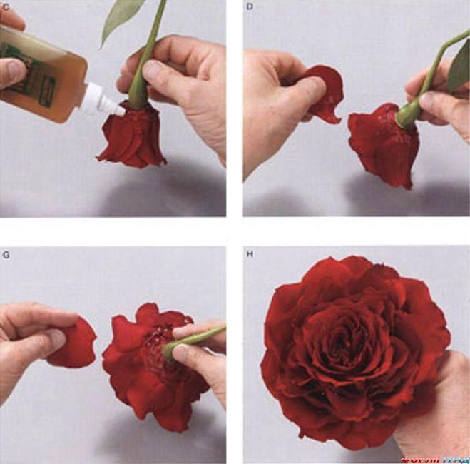 Как сделать цветы из готовых лепестков