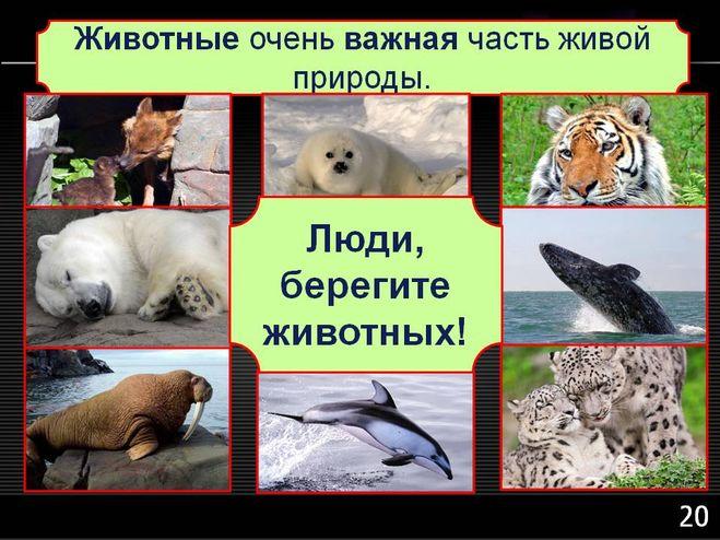 Животные и развлечения реферат 6339