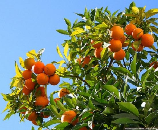 плод семя злаков 5 букв сканворд