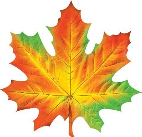 Кленовый лист осень картинки