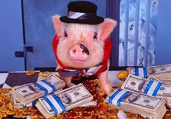 фото со свиньями