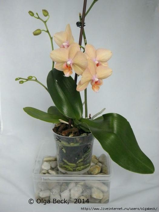 Синий Самые интересные идеи Листья орхидея иСамые