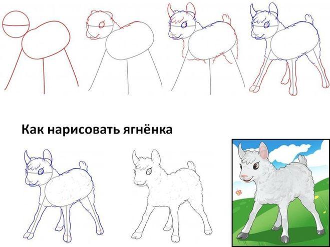 Как рисовать ягнёнка