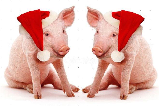 Новогодние поздравления на год Свиньи 2019