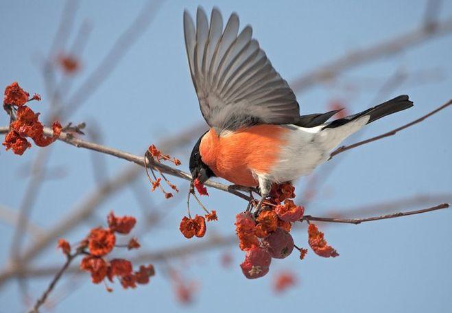 какие птицы перелетные