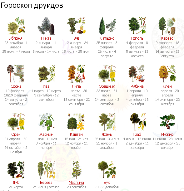Ведь каждое растение имеет душу, оно наделено безграничной мудростью и неиссякаемым запасом энергии!
