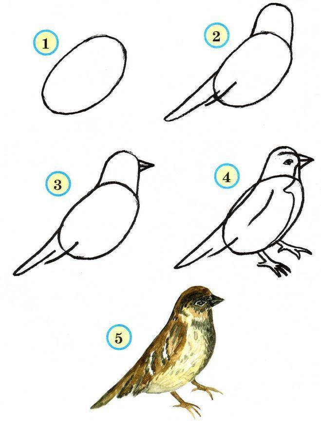 Как нарисовать чижа карандашом поэтапно детям