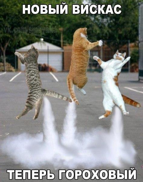 Пукают-ли коты