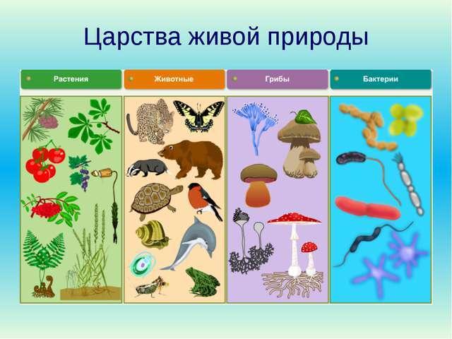 Доклад на тему царство живой природы грибы 2711