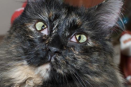 У кошки глаза закрываются пленкой как лечить