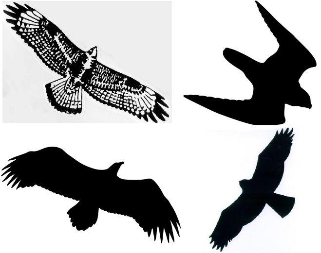 Отпугиватель голубей своими руками 66
