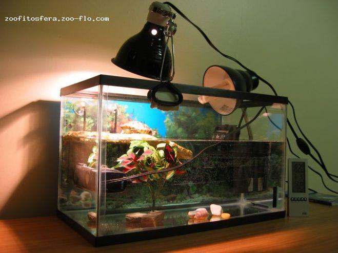 Сколько должна гореть уф лампа у черепах