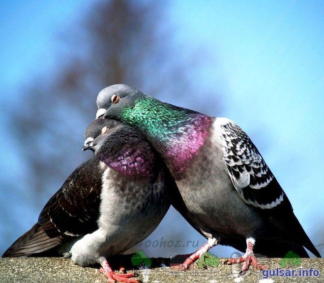 Как проходит размножение у птиц?