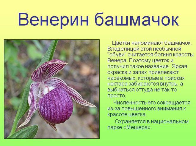 Доклад про растение красной книги 9008