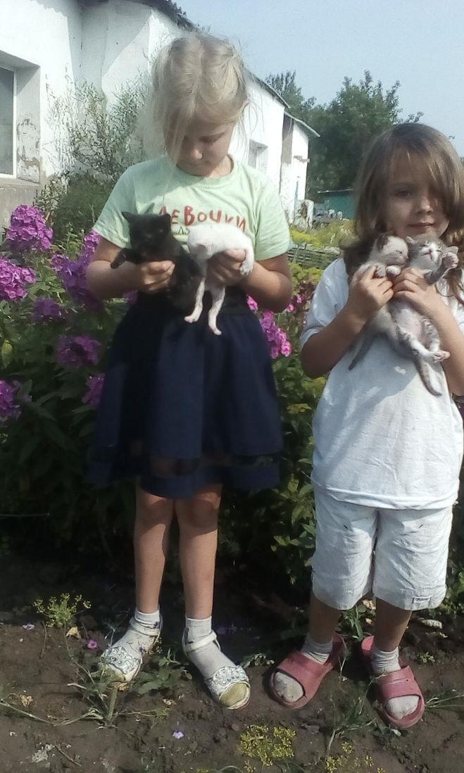 Дети вывели котят на улицу