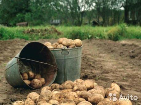 10 литровое ведро картошки сколько кг