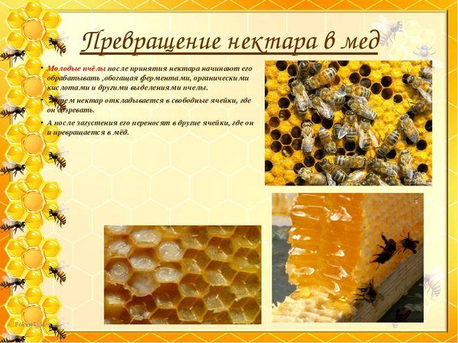 Сообщение про пчёл 2 класс окружающий мир