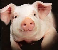 тильда свинья, тильда поросенок, тильда кабан выкройки