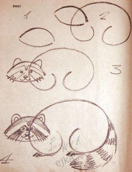 Енот рисовать карандашом