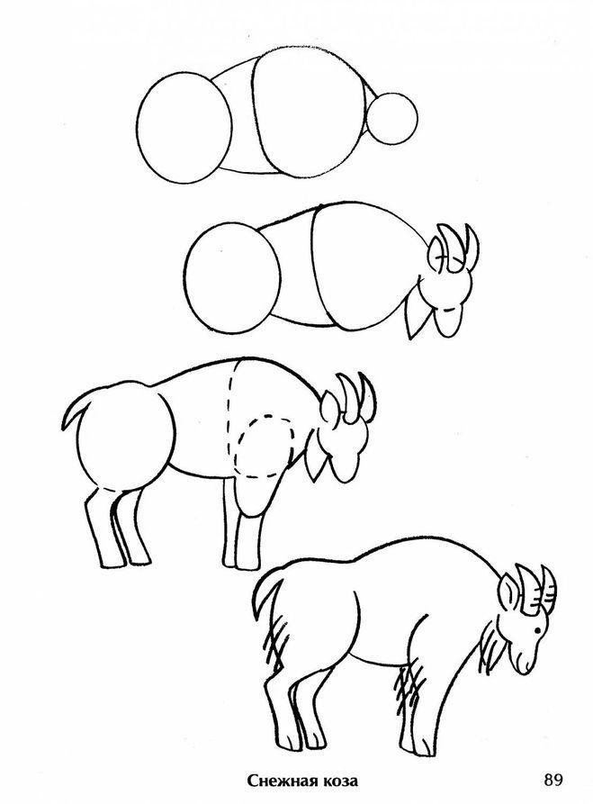 как нарисовать козу