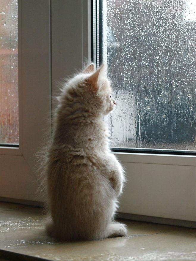 Коты смотрят в окно картинки