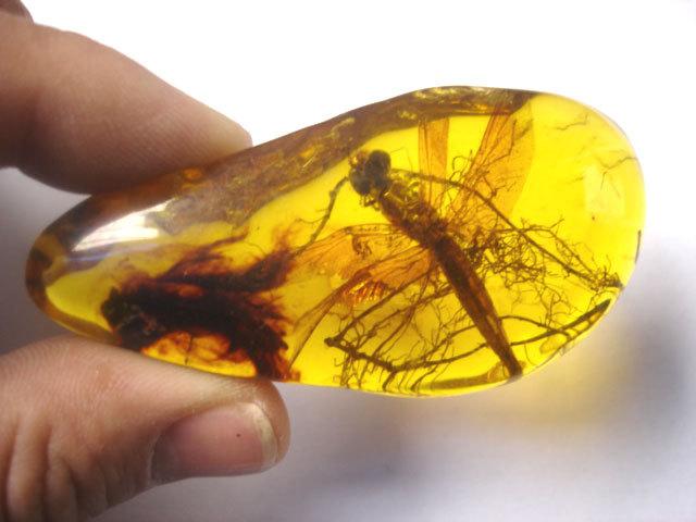 янтарь с застывшим в нём насекомым, цена