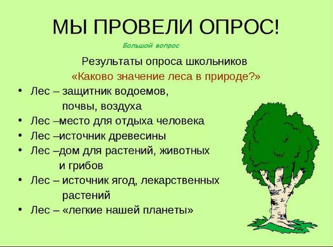 Лес источник кислорода доклад 238