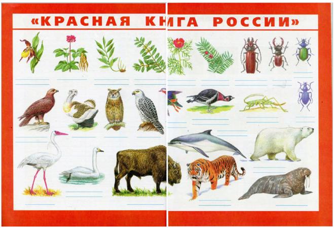 Доклад на тему животные и растения красной книги 5351