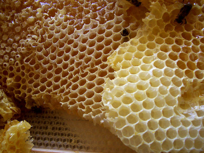 the science of trypophobia