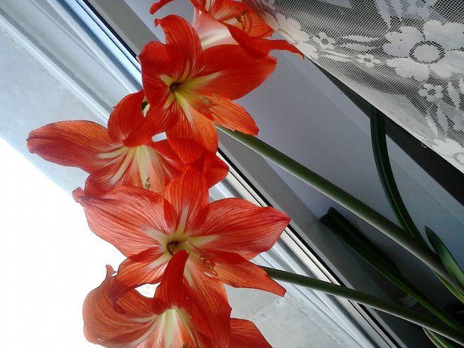 Можно ли сдавать цветы в магазин