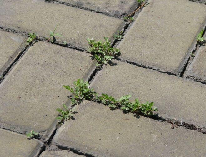 чем вывести траву с дорожек умельцы применяют