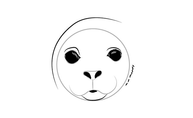 как рисовать тюленя 2