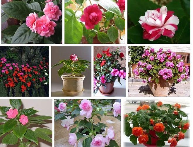 Какие цветы не нужно держать дома