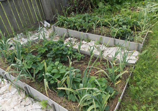 Уход за клубникой весной на даче: что делать, чтобы 55