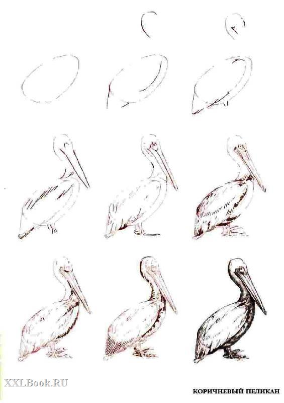 Рисунок пастелью для начинающих поэтапно животных