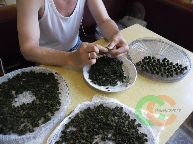 Условия для выращивания чая 82