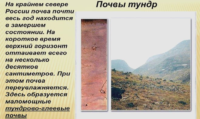 почвы бесструктурные с гелеевым горизонтом