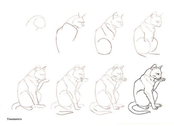 Как нарисовать кота поэтапно карандашом картинки