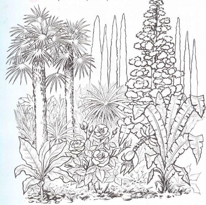 Раскраски ботанические сады